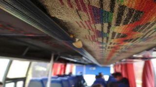 Школьный автобус... с флорой и фауной!